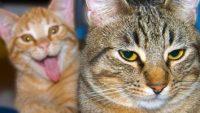 Waarom katten grappiger zijn dan we dachten