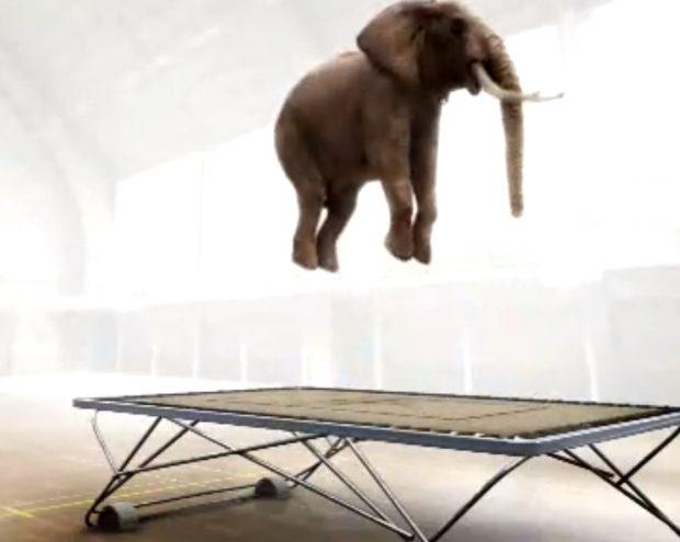 olifant springt