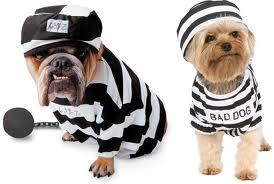 hond-gevangene
