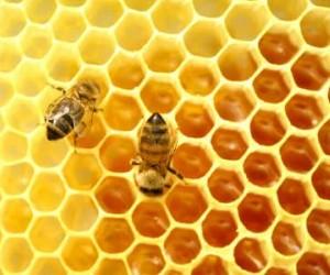 Honing houdbaarheid