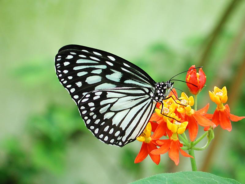 vlinder dating site Groningen